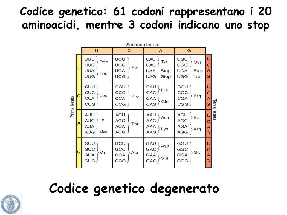 4 3 64 possibili combinazioni Solo 20 amino acidi Codice genetico
