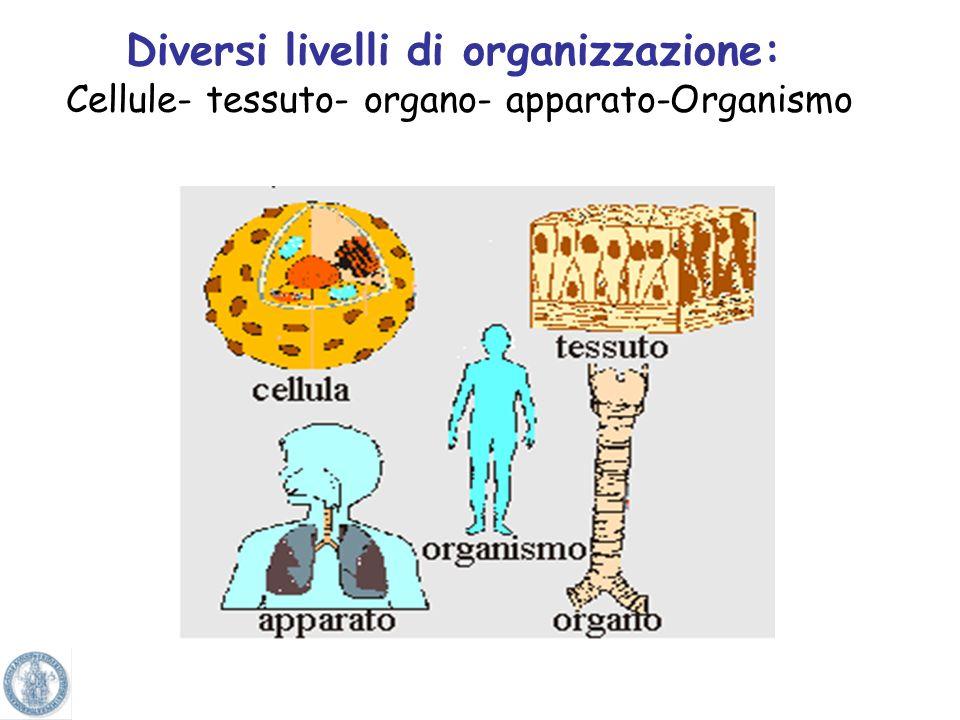 Diversi livelli di organizzazione: Cellule- tessuto- organo- apparato-Organismo