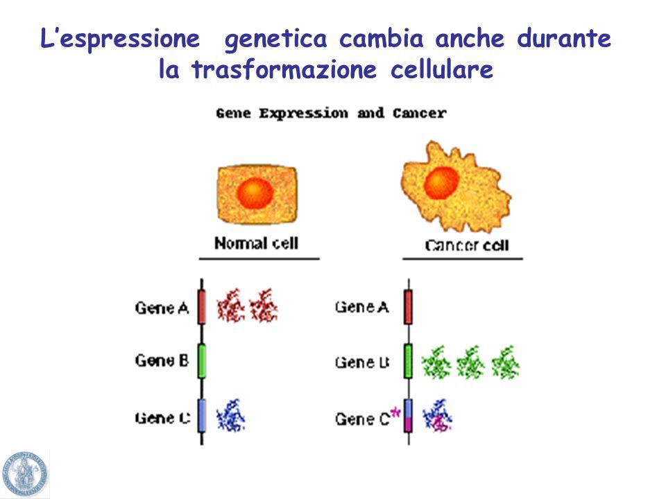 Le cellule dei vari tessuti hanno lo stesso contenuto di DNA, ma hanno una FUNZIONE diversa E lespressione dei geni e quindi delle proteine che cambia