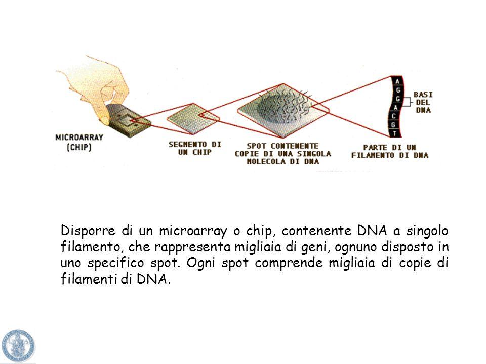 Analisi dellespressione genica Analisi dei dati Normalizzazione e combinazione dati Canale 1Canale 2Canali 1+2 Ibridazione del target marcato con il v