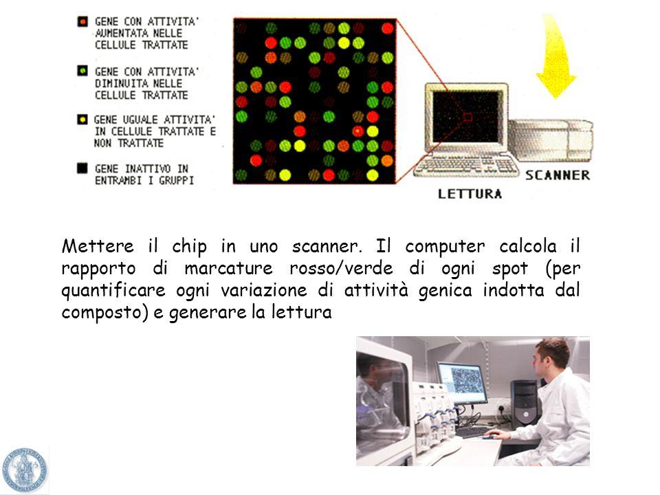 Il legame si ottiene quando il cDNA del campione trova la sequenza di basi complementari sul chip. Tale legame significa che il gene presente nel chip