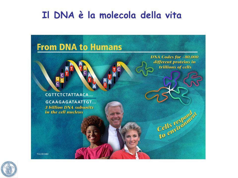 Il DNA è la molecola della vita