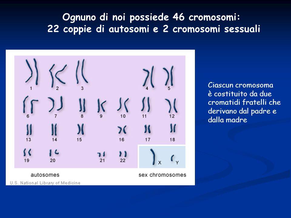 Ognuno di noi possiede 46 cromosomi: 22 coppie di autosomi e 2 cromosomi sessuali Ciascun cromosoma è costituito da due cromatidi fratelli che derivan