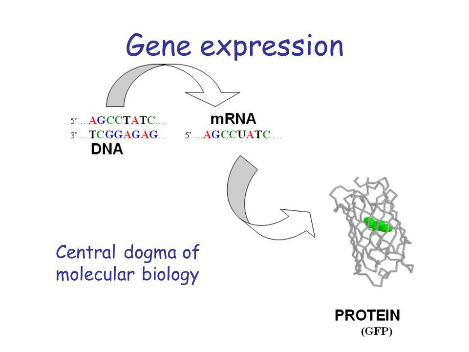 Gene expression Central dogma of molecular biology