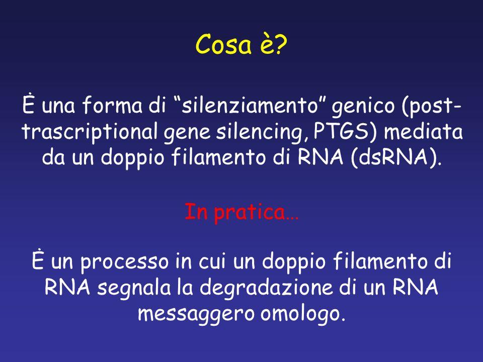Cosa è? Ė una forma di silenziamento genico (post- trascriptional gene silencing, PTGS) mediata da un doppio filamento di RNA (dsRNA). Ė un processo i