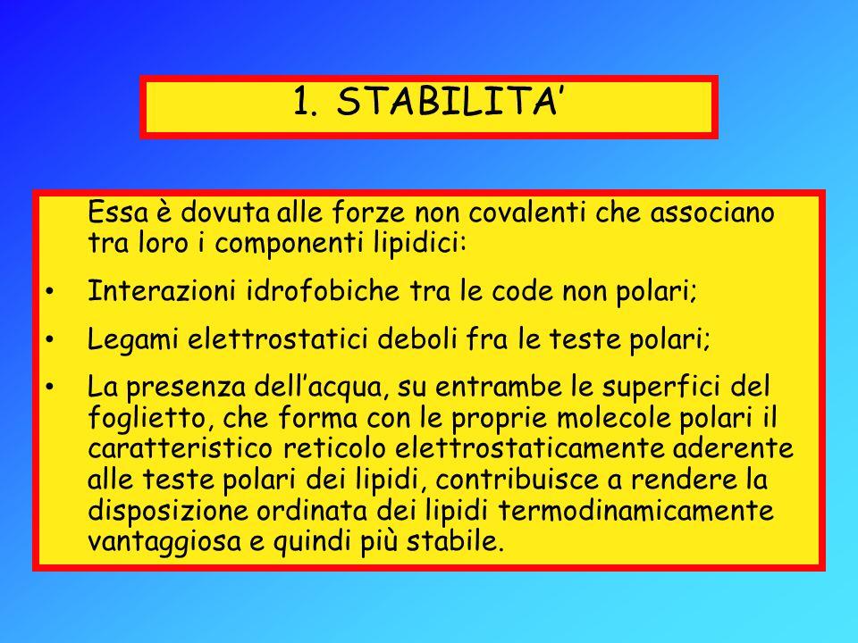1.STABILITA Essa è dovuta alle forze non covalenti che associano tra loro i componenti lipidici: Interazioni idrofobiche tra le code non polari; Legam