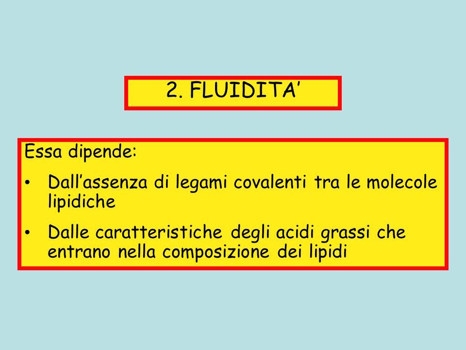 2. FLUIDITA Essa dipende: Dallassenza di legami covalenti tra le molecole lipidiche Dalle caratteristiche degli acidi grassi che entrano nella composi
