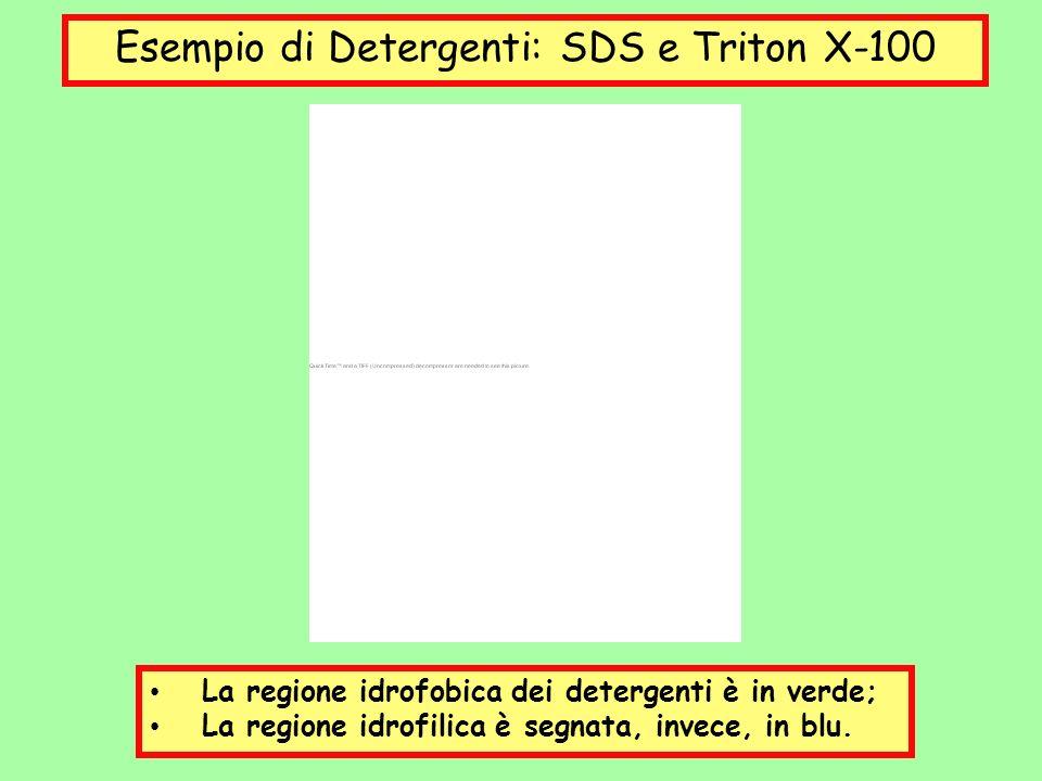 Esempio di Detergenti: SDS e Triton X-100 La regione idrofobica dei detergenti è in verde; La regione idrofilica è segnata, invece, in blu.