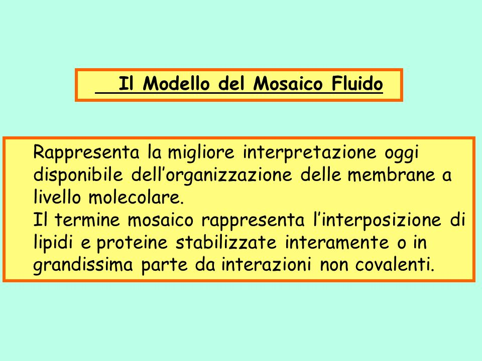 Rappresenta la migliore interpretazione oggi disponibile dellorganizzazione delle membrane a livello molecolare. Il termine mosaico rappresenta linter