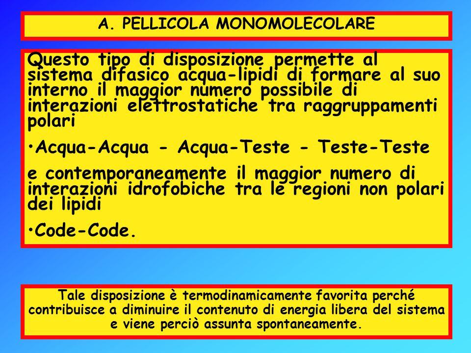 A. PELLICOLA MONOMOLECOLARE Questo tipo di disposizione permette al sistema difasico acqua-lipidi di formare al suo interno il maggior numero possibil
