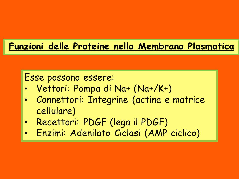 Funzioni delle Proteine nella Membrana Plasmatica Esse possono essere: Vettori: Pompa di Na+ (Na+/K+) Connettori: Integrine (actina e matrice cellular