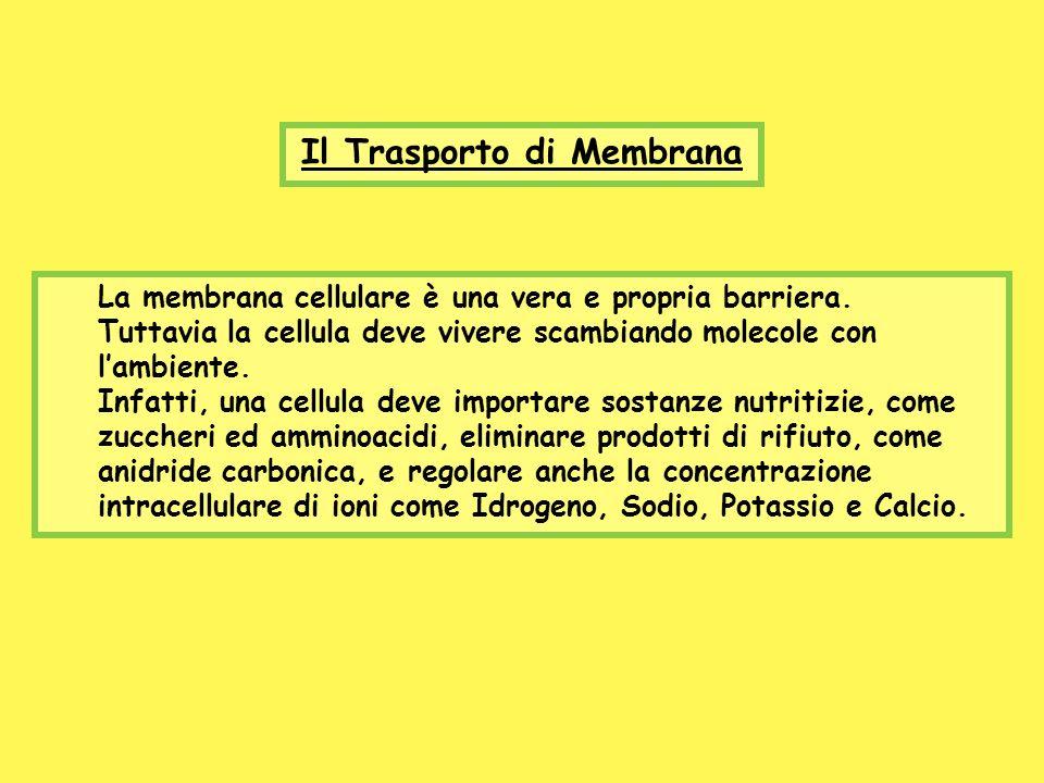 Il Trasporto di Membrana La membrana cellulare è una vera e propria barriera. Tuttavia la cellula deve vivere scambiando molecole con lambiente. Infat