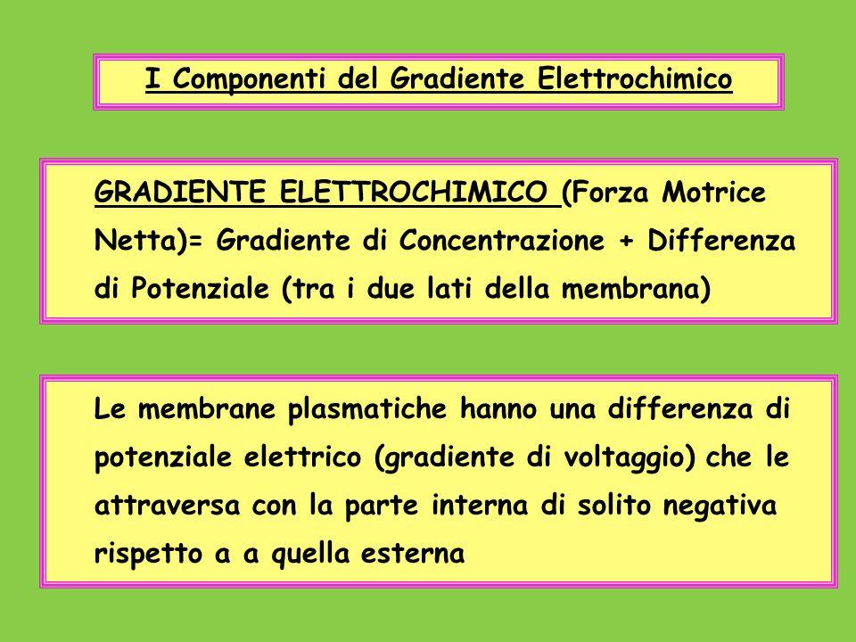 GRADIENTE ELETTROCHIMICO (Forza Motrice Netta)= Gradiente di Concentrazione + Differenza di Potenziale (tra i due lati della membrana) I Componenti de