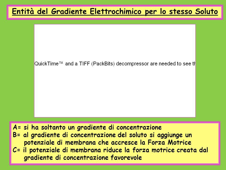 Entità del Gradiente Elettrochimico per lo stesso Soluto A= si ha soltanto un gradiente di concentrazione B= al gradiente di concentrazione del soluto