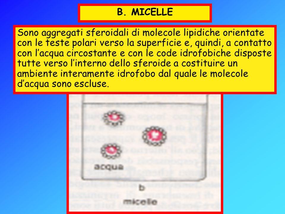 Il Glicocalice E da notare che alla composizione del glicocalice possono contribuire anche le glicoproteine ed i proteoglicani secreti dalla stessa cellula e subito adsorbiti alla sua superficie.