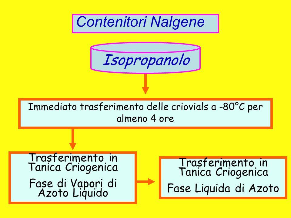 Contenitori Nalgene Isopropanolo Trasferimento in Tanica Criogenica Fase di Vapori di Azoto Liquido Immediato trasferimento delle criovials a -80°C pe