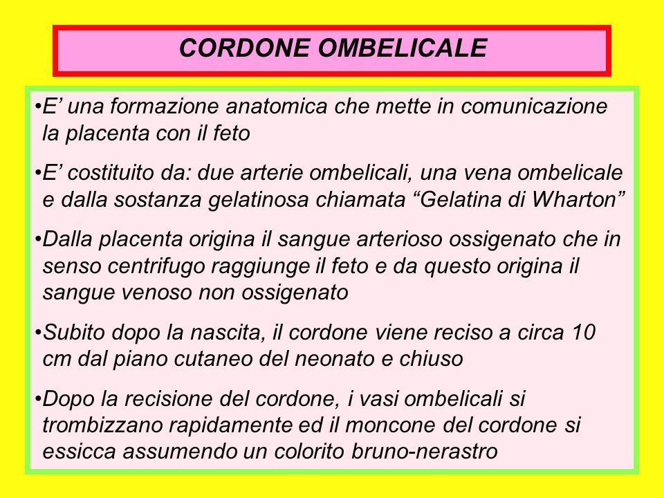 CORDONE OMBELICALE E una formazione anatomica che mette in comunicazione la placenta con il feto E costituito da: due arterie ombelicali, una vena omb