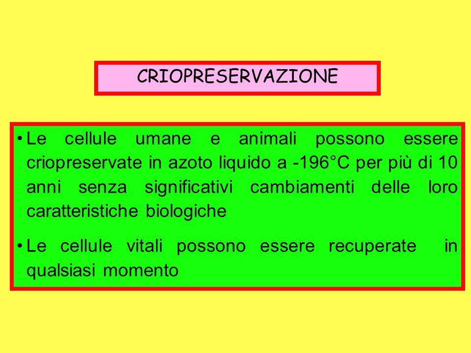 CRIOPRESERVAZIONE Le cellule umane e animali possono essere criopreservate in azoto liquido a -196°C per più di 10 anni senza significativi cambiament