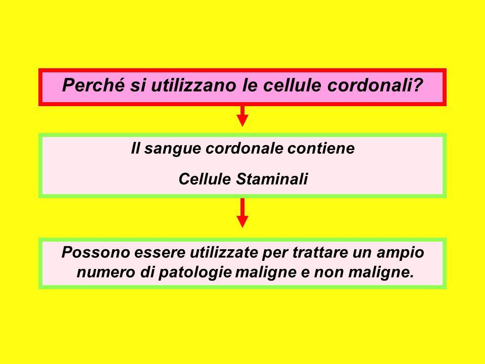 Perché si utilizzano le cellule cordonali? Il sangue cordonale contiene Cellule Staminali Possono essere utilizzate per trattare un ampio numero di pa