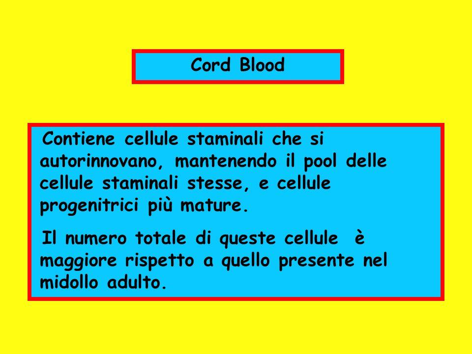 Cord Blood Contiene cellule staminali che si autorinnovano, mantenendo il pool delle cellule staminali stesse, e cellule progenitrici più mature. Il n