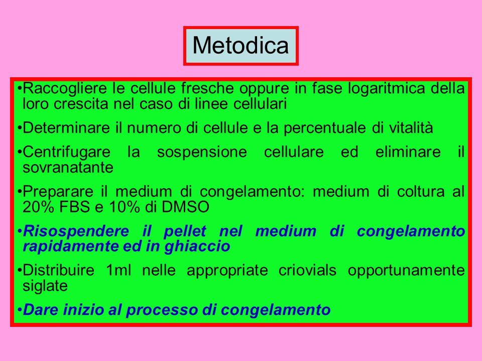 Metodica Raccogliere le cellule fresche oppure in fase logaritmica della loro crescita nel caso di linee cellulari Determinare il numero di cellule e