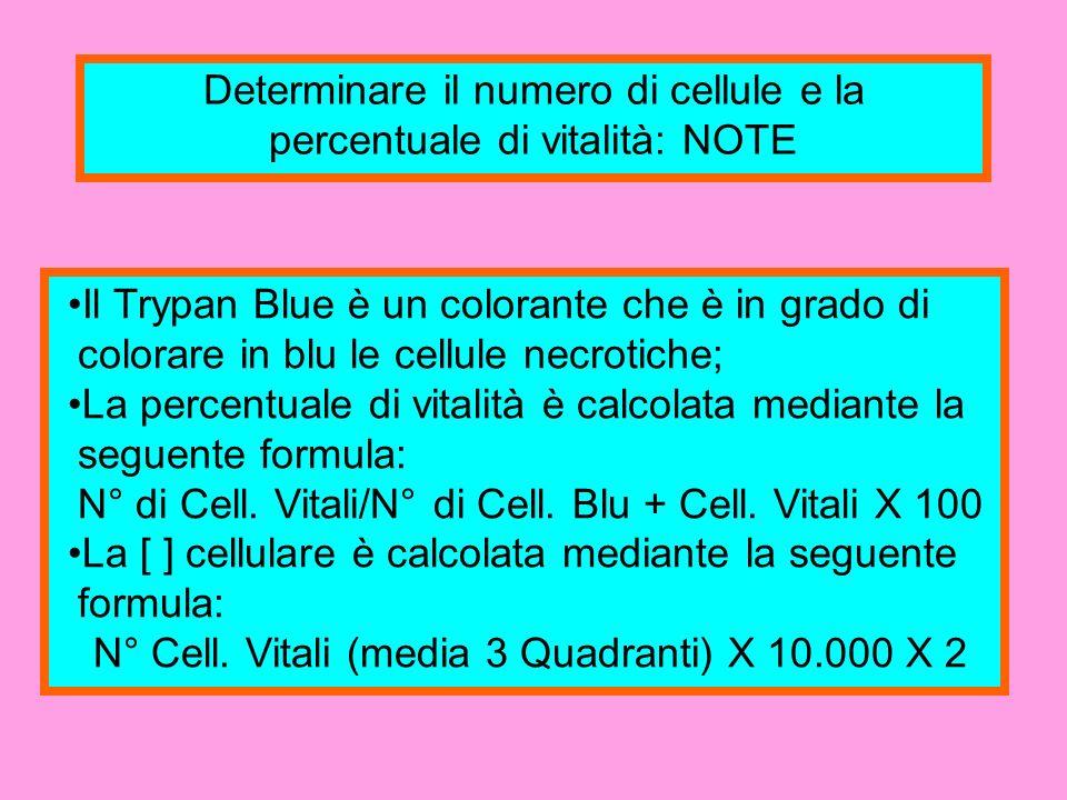 Determinare il numero di cellule e la percentuale di vitalità: NOTE Il Trypan Blue è un colorante che è in grado di colorare in blu le cellule necroti