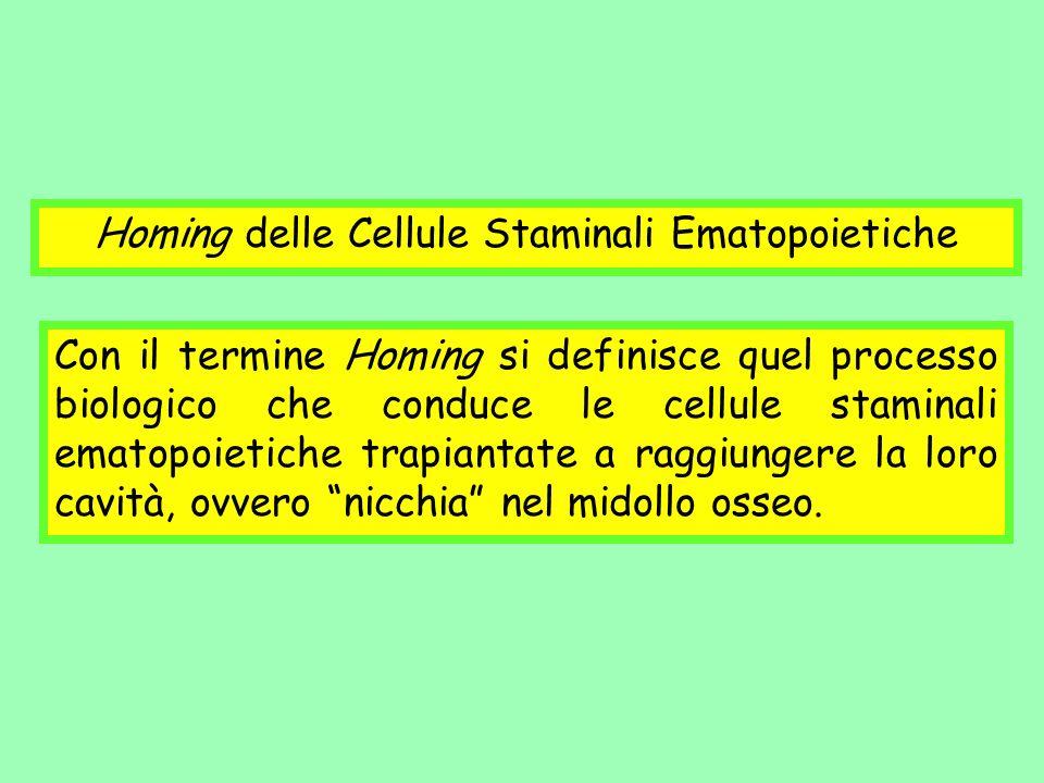 Homing delle Cellule Staminali Ematopoietiche Con il termine Homing si definisce quel processo biologico che conduce le cellule staminali ematopoietic