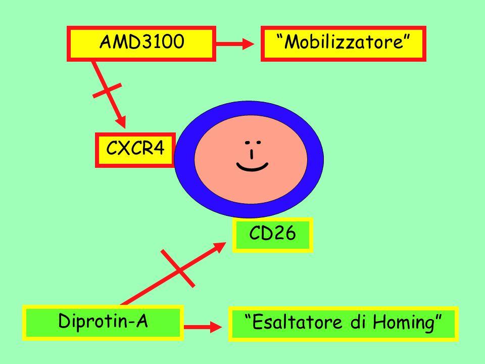 CD26 CXCR4 :-) AMD3100 Diprotin-A Mobilizzatore Esaltatore di Homing