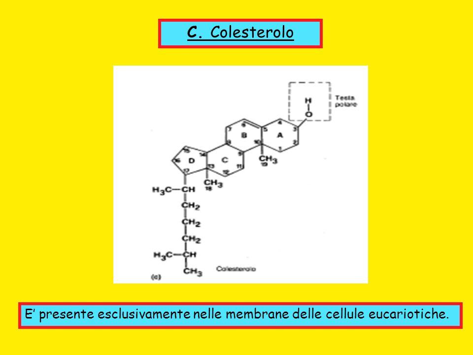 C. Colesterolo E presente esclusivamente nelle membrane delle cellule eucariotiche.