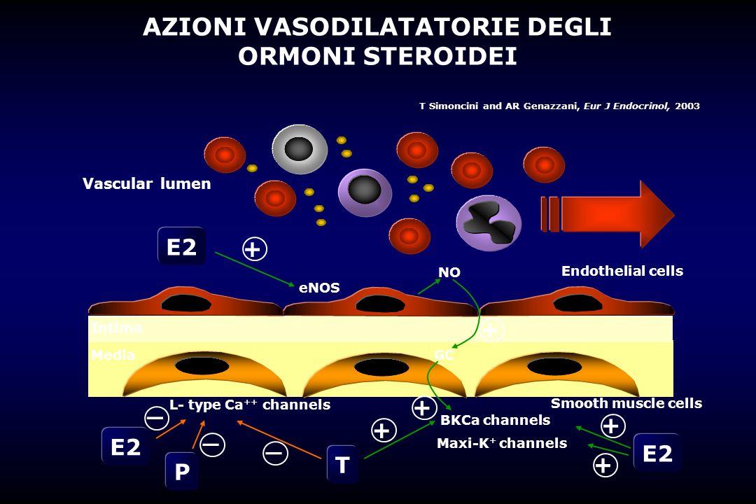 Vascular lumen E2 eNOS E2 L- type Ca ++ channels BKCa channels Maxi-K + channels E2 NO GC + P T Endothelial cells Smooth muscle cells + + + + + _ _ _