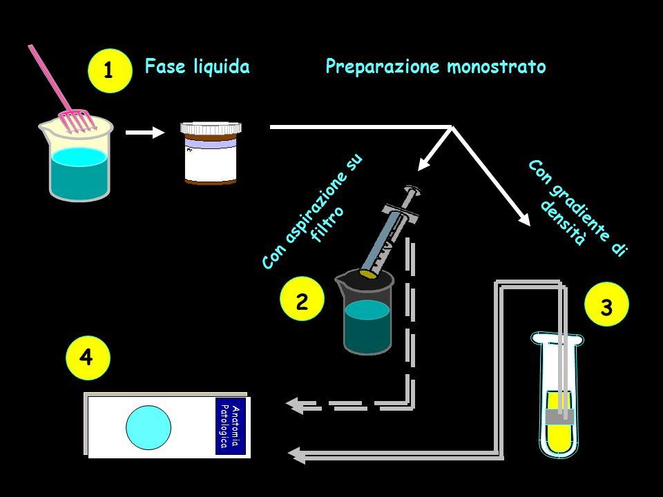 1 Preparazione monostrato Con aspirazione su filtro 2 Con gradiente di densità 3 Anatomia Patologica 4
