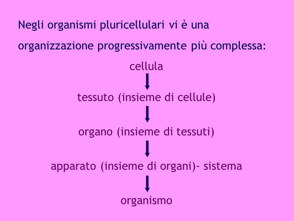 La cellula procariote è la cellula più semplice presente in natura.