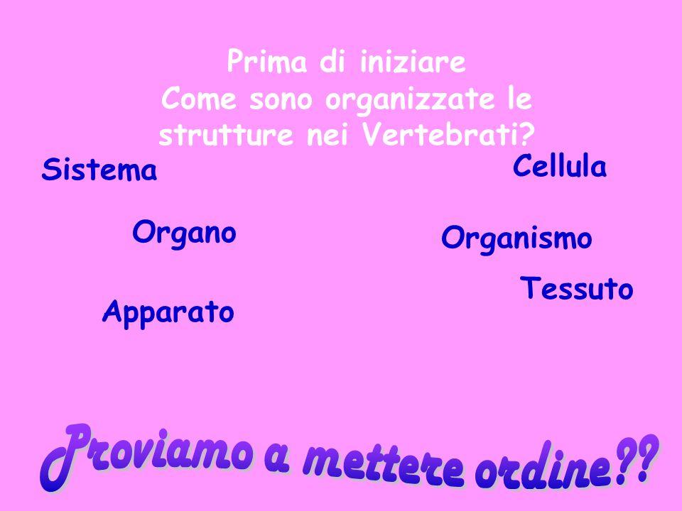 Prima di iniziare Come sono organizzate le strutture nei Vertebrati? Sistema Cellula Organismo Organo Tessuto Apparato