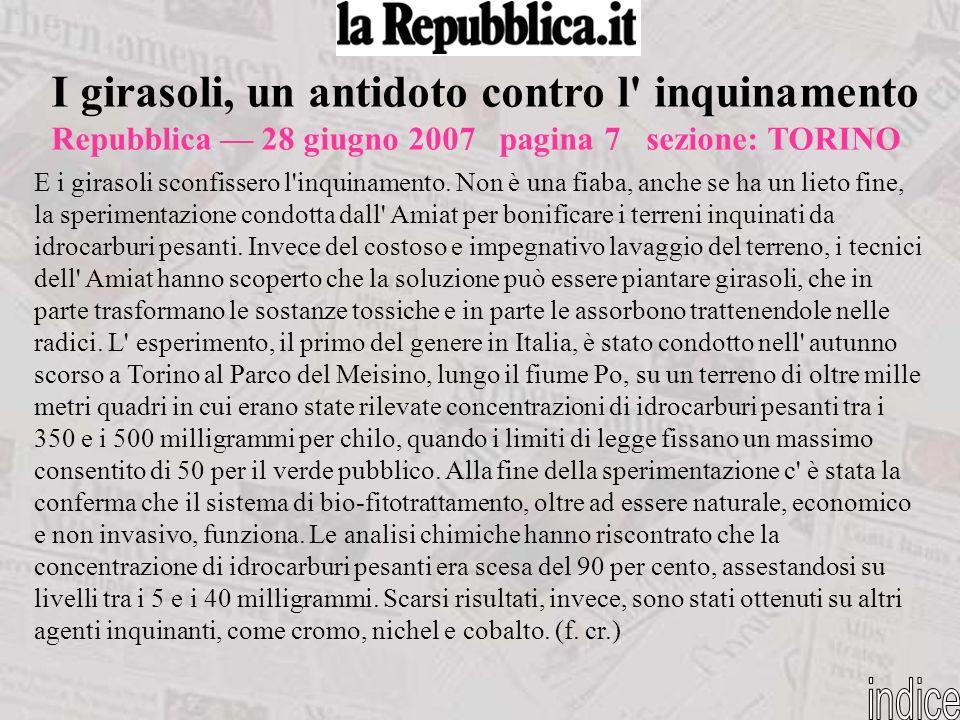 I girasoli, un antidoto contro l' inquinamento Repubblica 28 giugno 2007 pagina 7 sezione: TORINO E i girasoli sconfissero l'inquinamento. Non è una f