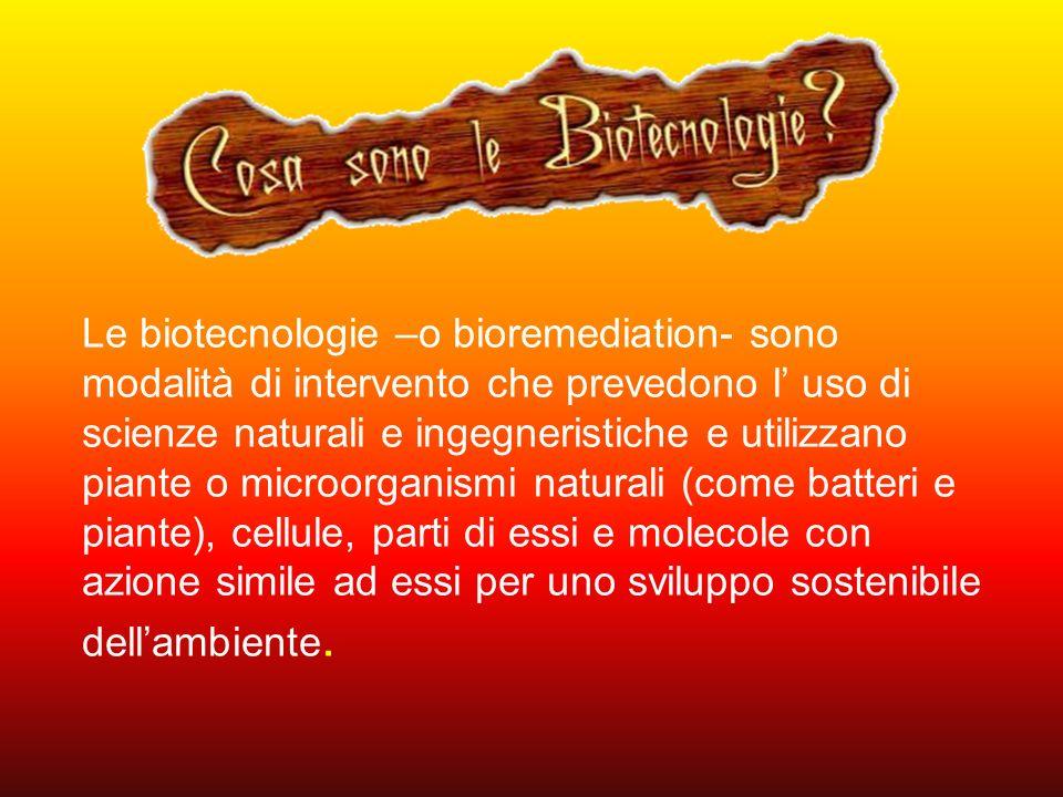 Le biotecnologie –o bioremediation- sono modalità di intervento che prevedono l uso di scienze naturali e ingegneristiche e utilizzano piante o microo