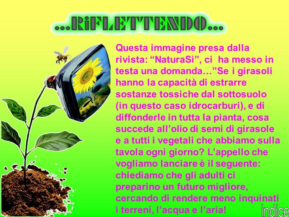 Questa immagine presa dalla rivista: NaturaSì, ci ha messo in testa una domanda…Se i girasoli hanno la capacità di estrarre sostanze tossiche dal sott