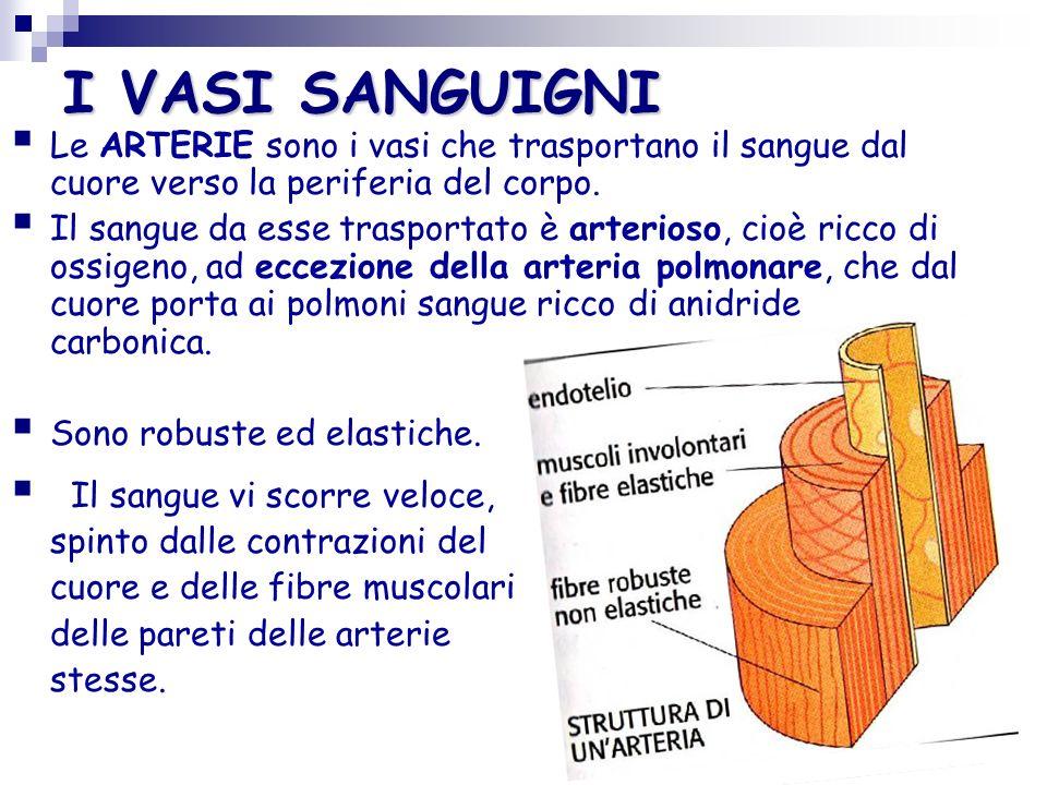 Il cuore è l organo centrale del sistema circolatorio: è un muscolo involontario cavo.