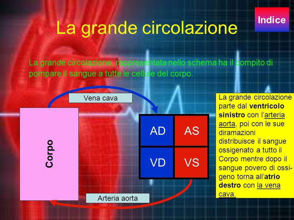 LA PICCOLA CIRCOLAZIONE La piccola circolazione origina dal ventricolo destro con larteria polmonare. Le arterie arrivano ai polmoni dove il sangue vi