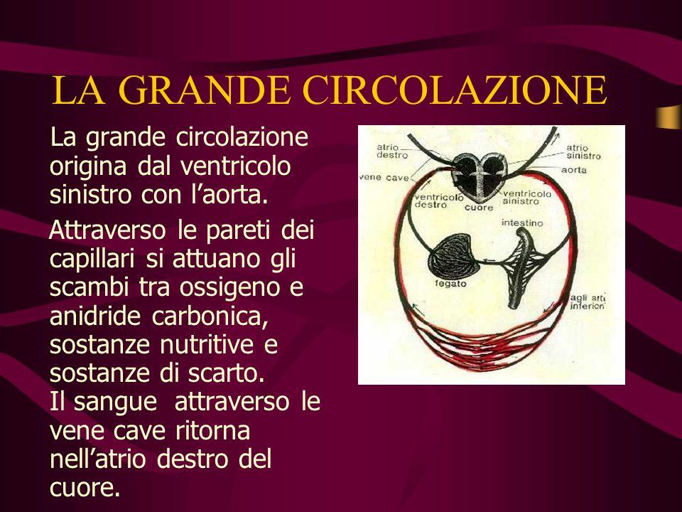 La grande circolazione La grande circolazione, rappresentata nello schema ha il compito di pompare il sangue a tutte le cellule del corpo. VDVS ADAS C