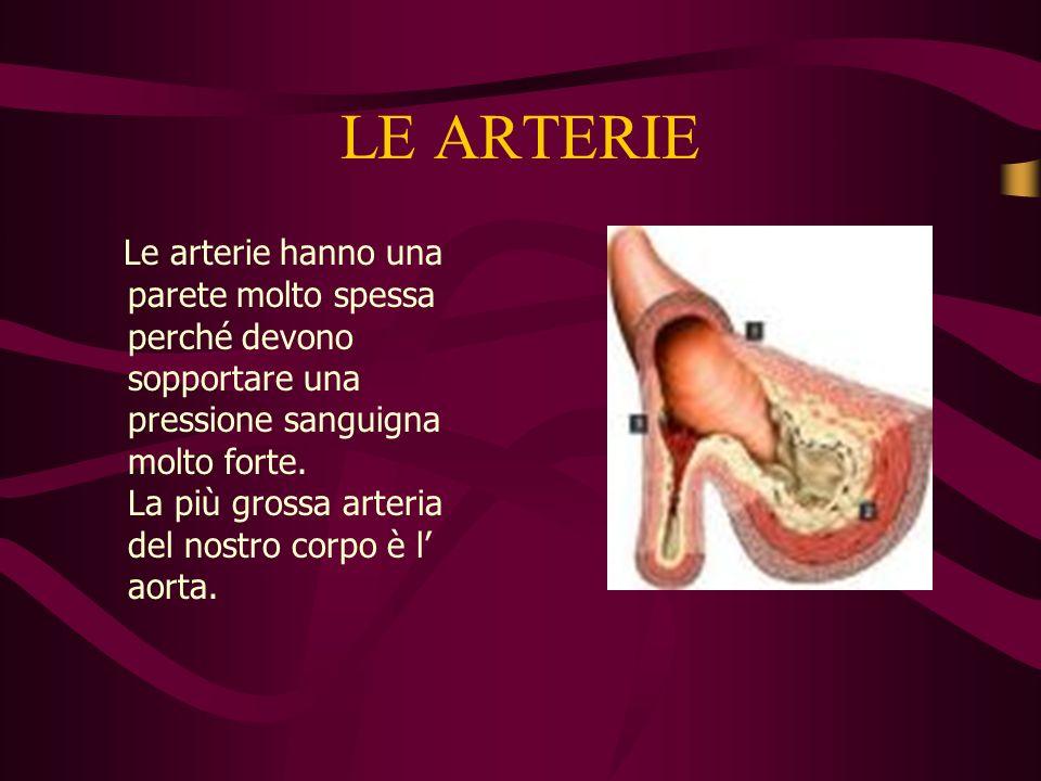LE ARTERIE Le arterie hanno una parete molto spessa perché devono sopportare una pressione sanguigna molto forte.