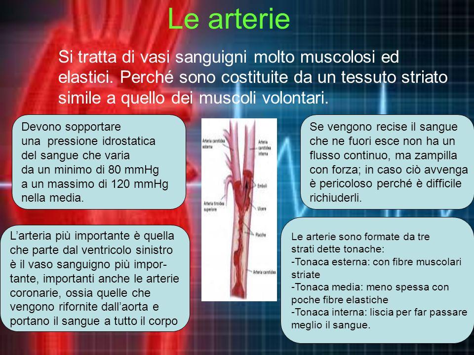 LE ARTERIE Le arterie hanno una parete molto spessa perché devono sopportare una pressione sanguigna molto forte. La più grossa arteria del nostro cor