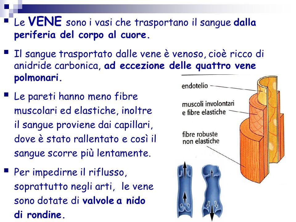Le VENE sono i vasi che trasportano il sangue dalla periferia del corpo al cuore.