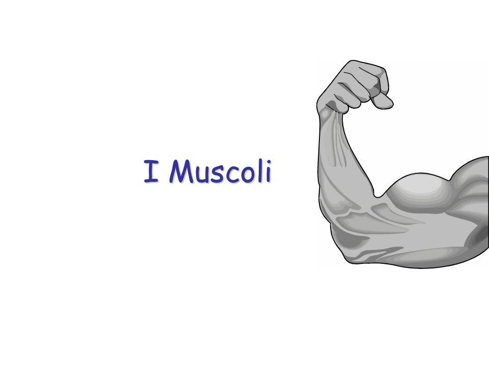 Lo scheletro fornisce i punti di attacco ai muscoli e il sistema muscolare fa da motore, garantendo il movimento. Il Movimento