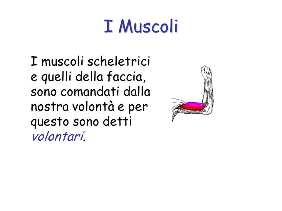 Nella maggior parte dei casi, i muscoli realizzano il movimento in collaborazione con le ossa e sono detti muscoli scheletrici. In altri casi muovono