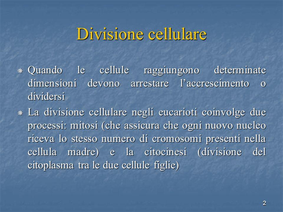 2 Divisione cellulare Quando le cellule raggiungono determinate dimensioni devono arrestare laccrescimento o dividersi Quando le cellule raggiungono d