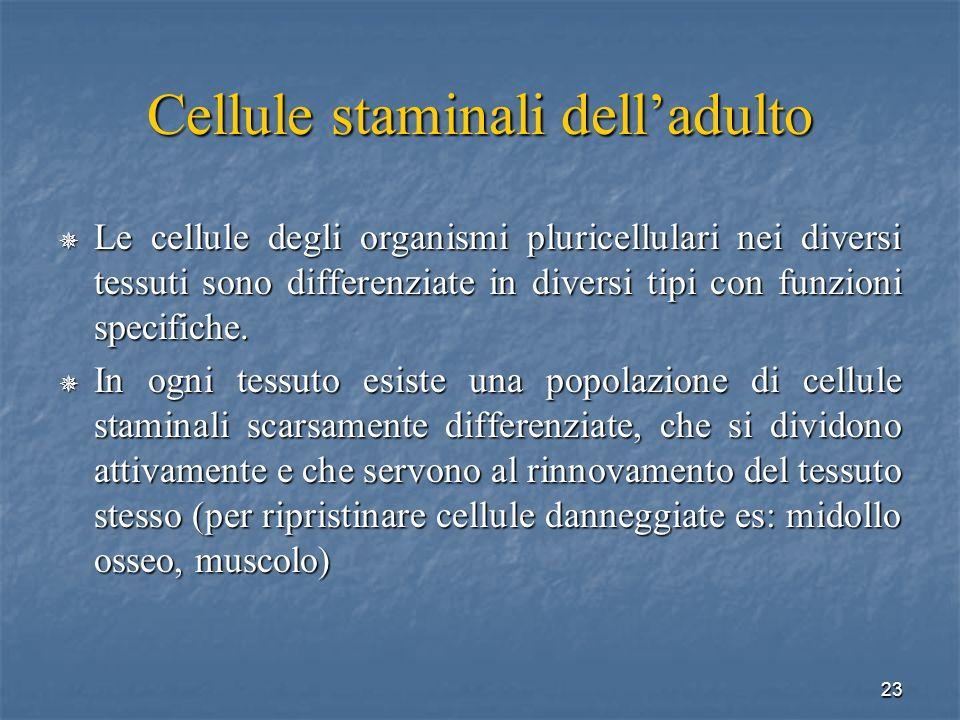 23 Cellule staminali delladulto Le cellule degli organismi pluricellulari nei diversi tessuti sono differenziate in diversi tipi con funzioni specific