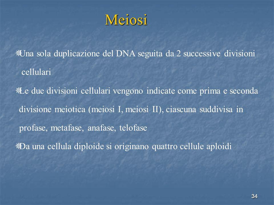 34 Meiosi Una sola duplicazione del DNA seguita da 2 successive divisioni cellulari Le due divisioni cellulari vengono indicate come prima e seconda d