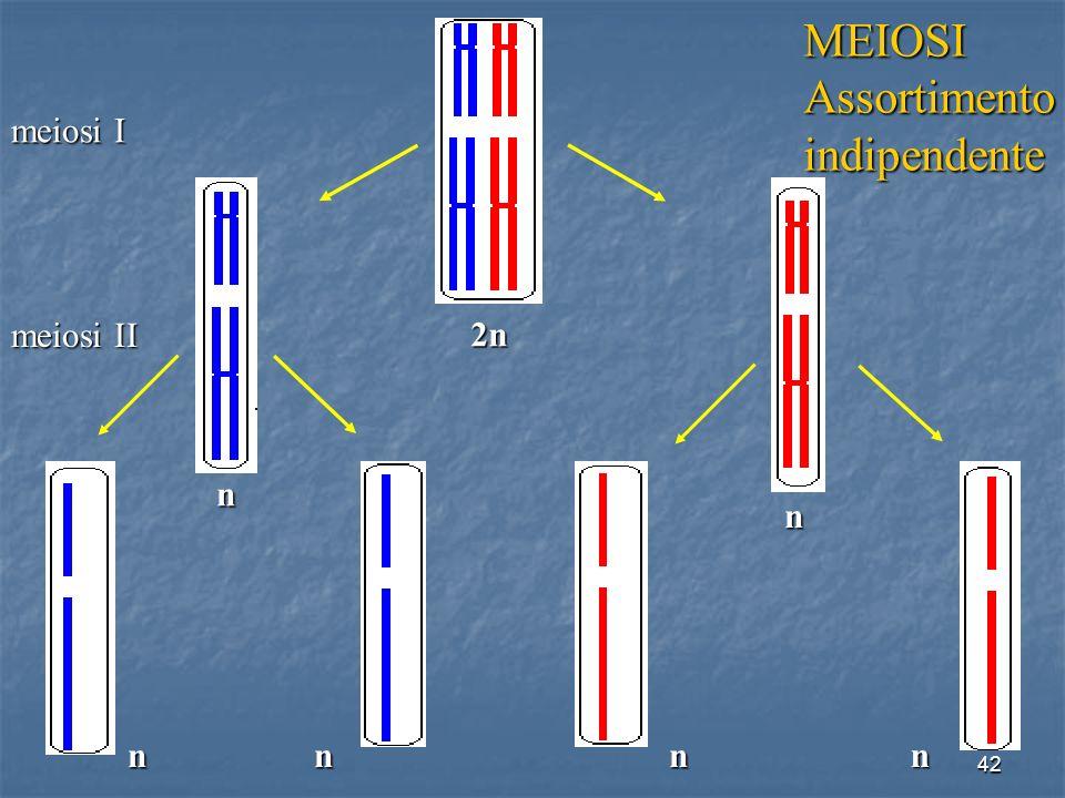 42 n n nnn n meiosi I meiosi II 2n 1 8 8 8 8 8 1 1 1 1 MEIOSIAssortimentoindipendente