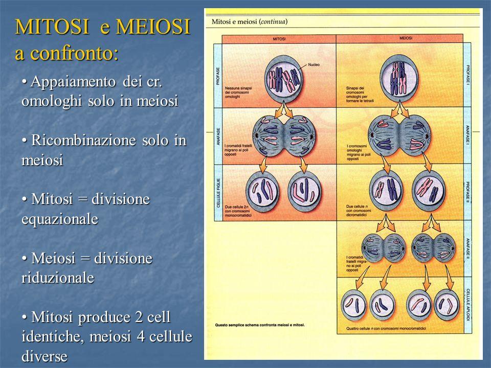 44 Appaiamento dei cr. omologhi solo in meiosi Ricombinazione solo in meiosi Mitosi = divisione equazionale Meiosi = divisione riduzionale Mitosi prod