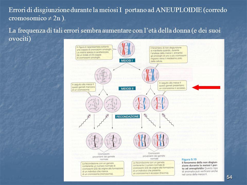 54 Errori di disgiunzione durante la meiosi I portano ad ANEUPLOIDIE (corredo cromosomico 2n ). La frequenza di tali errori sembra aumentare con letà